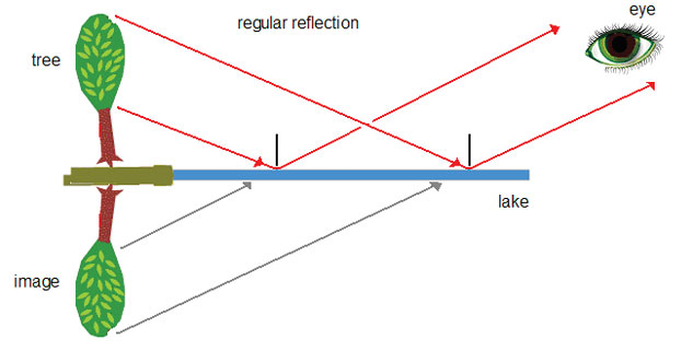 Lesson 3 ray diagram showing regular specular refection from a smooth flat surface ccuart Gallery